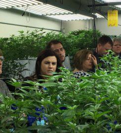 Marijuana Greenhouse Tour