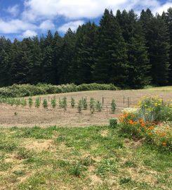 Humboldt Cannabis Tours