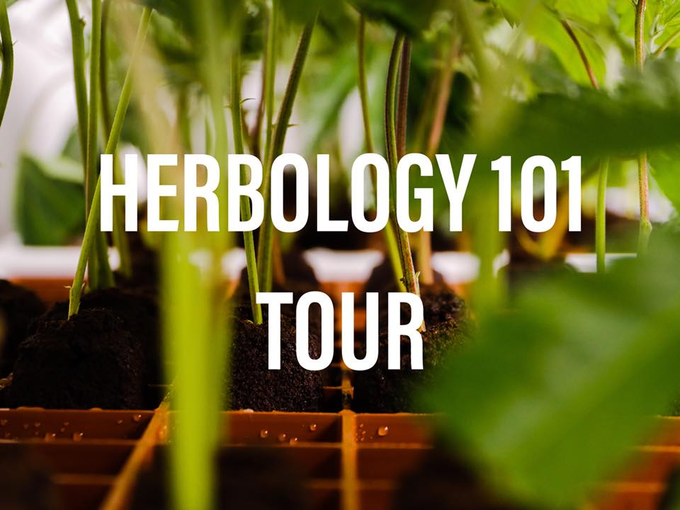 Herbology Cannabis Tours