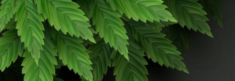 Medical Marijuana Card Long Beach – 420 Evaluations
